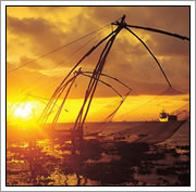Chinese Visnetten - Kerala Cochin