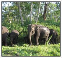 Natuurreservaat - India